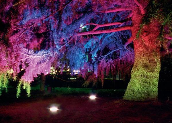 Светодиодная подсветка дерева