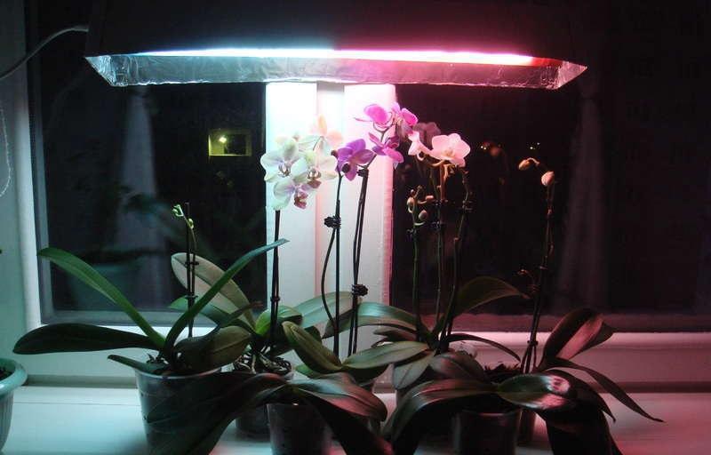 Двухцветная лампа