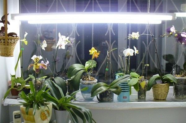 Освещенные орхидеи