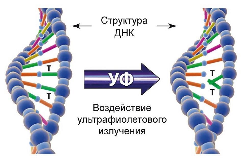 Воздействие УФ излучения на ДНК вируса